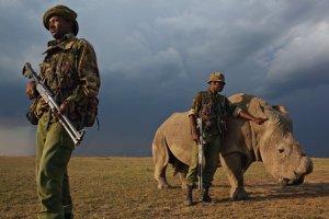 rinocerontes15_670x447